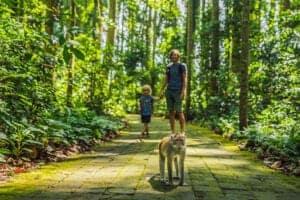 Efter at have spist morgenmad på hotellet, checker vi ud og sætter kurs mod Munduk.   Undervejs stopper vi ved abeskoven i Ubud, hvor skovens fritgående aber nok kommer forbi og hilser på os.   Herefter kører vi op til Bedugul, som er et imponerende resort i bjergene, ca. 850 meter over havet. Vi fortsætter til Candi Kuning, hvor vi besøger det lokale frugt-  og blomstermarked på vejen, inden vi  når til dagens højdepunkt, nemlig Ulun Danu templet, som er dedikeret til havets gudinde, Dewi Danu. Templet befinder sig på søen i Beratan.   Afslutningsvis besøger vi højlandet, Gobleg, hvor du har en smuk panoramaudsigt udover tvillingesøerne, Buyan og Tambilngan.   Vi ankommer til hotel Puri Lumbung, hvor vi overnatter i hotellets Standard Cottage.