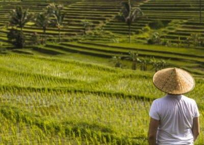 Rejse til Bali: Øens højdepunkter