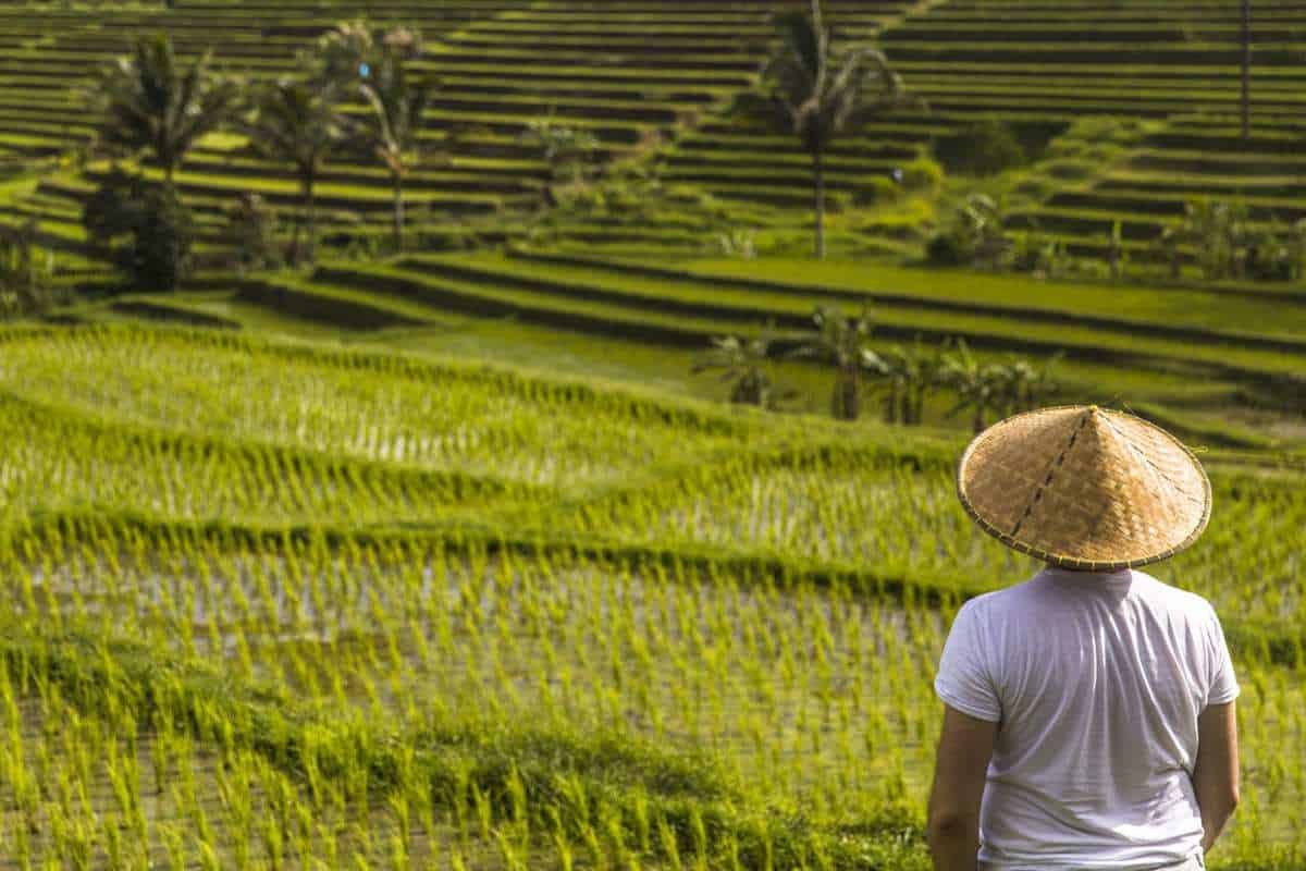 local-in-rice-field-scaled