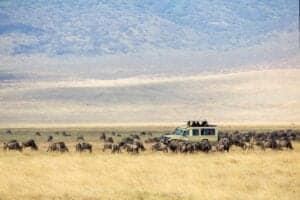"""Efter en tidlig morgenmad i lodgen kører vi ca. 2 timer, til vi ankommer til Ngorongoro-krateret.  Ngorongoro-krateret er et oplagt sted at besøge.  Krateret har massevis af græsstepper og skove fyldt med akacietræer. Her vil du finde stort set alle dyrearter, som lever på savannen i Tanzania. Det betyder, at du også får chancen for at opleve og observere Afrikas """"Big Five"""", som er: elefanten, løven, bøflen, næsehornet og leoparden.  Derudover vil du kunne opleve hyænen og mere end 500 forskellige fuglearter.  Efter en hyggelig picnic i krateret og flere game-drives tager vi tilbage til Karatu, til vores lodge, hvor vi overnatter."""