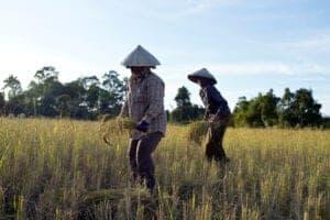 I dag skal du ud og besøge en landsby, som ligger ca. en times kørsel fra Siem Reap. Her besøger du først en lokal nonprofitorganisation, der beskæftiger flere af landsbykvinderne, som de ansætter til at væve måtter. Herefter skal du ud og have nogle hands on-oplevelser! Du skal nemlig ud og tage del i de daglige aktiviteter i landsbyen. Bl.a. skal du velsignes ved et lokalt kloster, ud at fiske eller hjælpe til i marken eller med dyrene. Det, du har betalt for denne dags program, går ubeskåret til lokalsamfundet – og dermed er du med til at støtte deres økonomi med dit besøg.