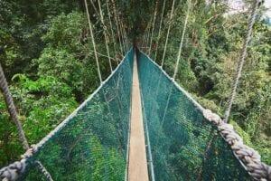 Vi starter dagen med at køre til Lahad Datu, hvor vi besøger Borneo Nature Tour Office. Her gennemgår vi dagens program, hvorefter vi kører gennem Borneos ødelandskab for at ankomme til Borneo Rainforest Lodge. Turen tager ca. 2,5 time.   Når vi ankommer til lodgen, får vi en lækker velkomstdrink inden vi går til bords og spiser frokost.  Om eftermiddagen skal vi atter have vandreskoene på. Denne gang skal vi vandre langs skovens naturstier og ud på endnu en spændende canopy walk, denne gang i 26 meters højde. Højden gør, at vi let kommer i kontakt med skovens søde beboere: aberne.   Når vi kommer tilbage til lodgen, nyder vi en lokal middag inden vi tager på en aftentur i skoven, hvor vi i et åbent køretøj skal spotte skovens natdyr.