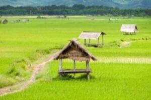 Efter morgenmaden kører vi mod Luang Namtha-provinsen. Undervejs stopper vi ved lokale landsbyer, hvor vi afsætter tid til, at du kan tage nogle flotte billeder. Det meste af dagen går på landevejen. Når vi ankommer til Luang Namtha-distriktet, får du et lokalt gæsteværelse til rådighed.