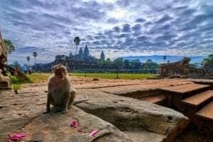 I dag kommer din guide og kører dig til lufthavnen, hvorfra du skal flyve til Siem Reap. Ved ankomst i Siem Reap bliver du hentet af guiden, som kører dig fra lufthavnen til dit hotel, hvor du har eftermiddagen til ren afslapning. Om aftenen får du det første glimt Angkor Wat-templerne på en sejltur gennem byen i gondol. Efter du er kommet ombord i gondolen, sejler du i roligt tempo til den sydvestlige del af Angkor Thom og det lille tempel Prasat Chrung, som er helt tilbage fra det 12. århundrede. Tag gerne en kold øl eller to med – og nyd dem, mens du ser solen gå ned over Angkors majestætiske templer.