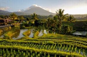 Efter morgenmaden forlader vi Ubud og bevæger os mod Tabananområdet. I Tabanan får du for alvor set det ægte Bali, både hvad angår natur og kultur. Tabanan er uden tvivl det smukkeste naturområde med dets fantastiske smaragdgrønne risterrasser, stille sorte vulkansandsstrande og autentiske kulturelle scene.   Vi starter dagen i Tabanan med at checke ind på Rumah Desa Homestay. Eftermiddagen bruger vi i rismarkerne, hvor vi lærer at plante nye ris og pløje rismarker med køer. Vi får også et indblik i, hvordan man bager de traditionelle balinesiske kager.   Vi afslutter dagen med et varmt bad efterfulgt af en aften fyldt med kultur, musik, dans og en overdådig middag.