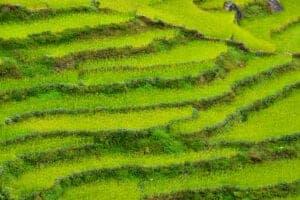 Efter vi har spist morgenmad, begiver vi os ud på dagens trek, som kommer til at tage 4-5 timer. Ruten, vi skal ud på i dag, fører os først nedad gennem terrasser med lokale afgrøder, til vi kommer til Kimrung Khola-floden. På den anden side af floden begynder ruten igen at gå opad. Dagens destination er Chhomrong, som er den højest liggende permanent beboede landsby i Annapurna-bjergene (den ligger i 2.100 meters højde). Vi overnatter i et lokalt tehus.