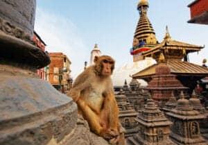 Velkommen til Nepal. Når du ankommer, og har taget imod din bagage, vil vores engelsktalende repræsentant tage imod dig uden for ankomsthallen. Her bliver du kørt til et hotel i Kathmandu, hvor du overnatter. I morgen tidlig rejser vi mod Pokhara. Rigtig god fornøjelse.
