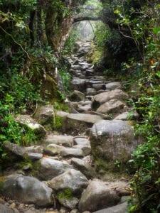 Efter morgenmaden starter dagens eventyr på Mount Kinabalu. Først kører vi til kontoret, hvor vi bliver registreret og møder vores bjergguide.  Vi starter trekket ved Timpohon Gate og vandrer stejlt opad, til vi ankommer til Laban Rata Resthouse, placeret 3.300 meter over havet. Her er du garanteret en fantastisk udsigt.