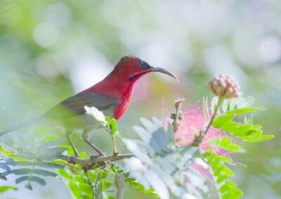 Fuglerejse i Nepal