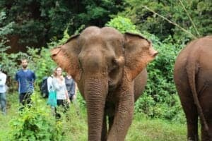 Elefanter, kultur og badeferie