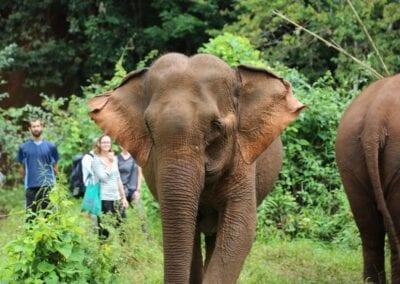 Rejse til Cambodia: Elefanter, kultur og badeferie
