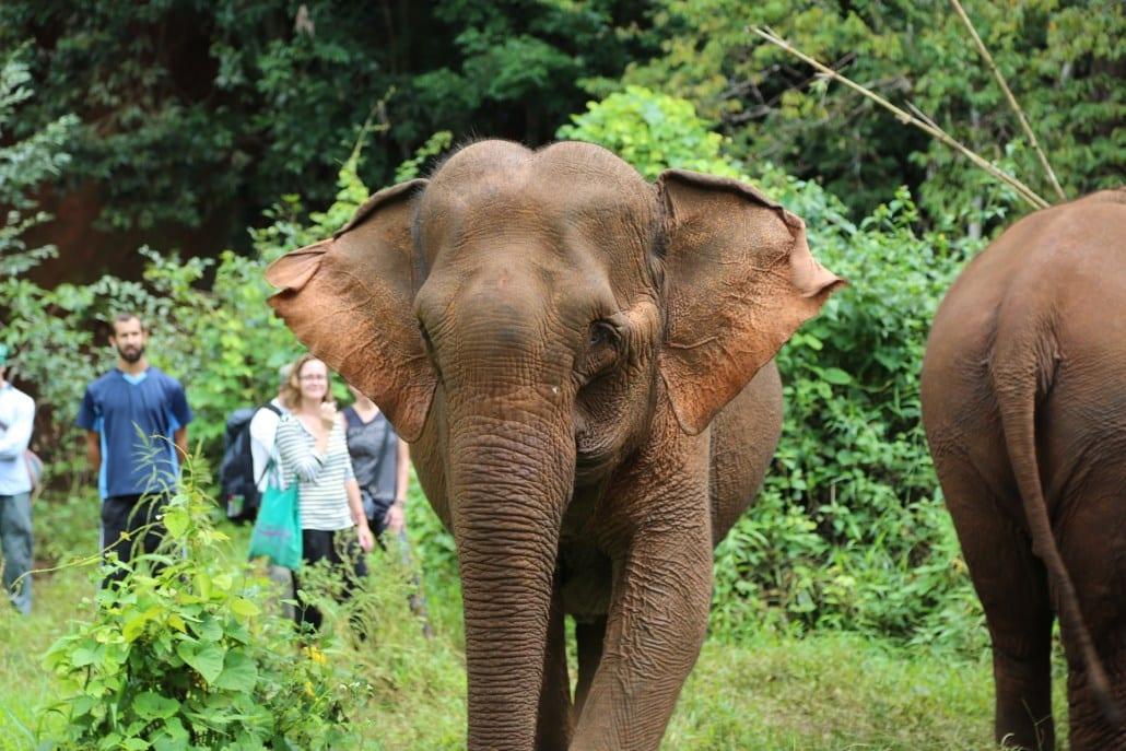 Sådan holder du en elefant venlig ferie