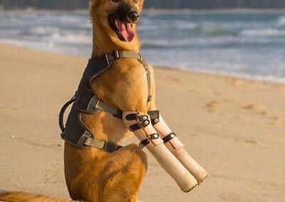 Soi-Dog