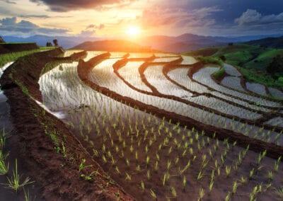 Rundrejse i Vietnam, Cambodia og Thailand