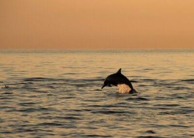 Bali: Delfiner, koraller og Mount Batur