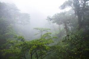 Turen til Monteverde fører dig gennem meget forskelligartede naturlandskaber: Fra den varme, sydlige del af de nordlige lavlande til de kolde, tågede bjerge i Monteverde. Du kører rundt om den smukke sø Lake Arenal, hvorefter du kører gennem byen Tilarán. Fra Tilarán kører du ad grusveje til Santa Elena, som er hovedbyen i området. Herfra fortsætter du turen til det lille, landlige samfund San Luis, hvor du skal tilbringe de næste dage.