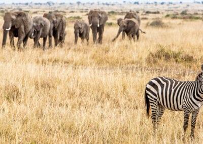 Kenya & Tanzania: Safari og Zanzibar