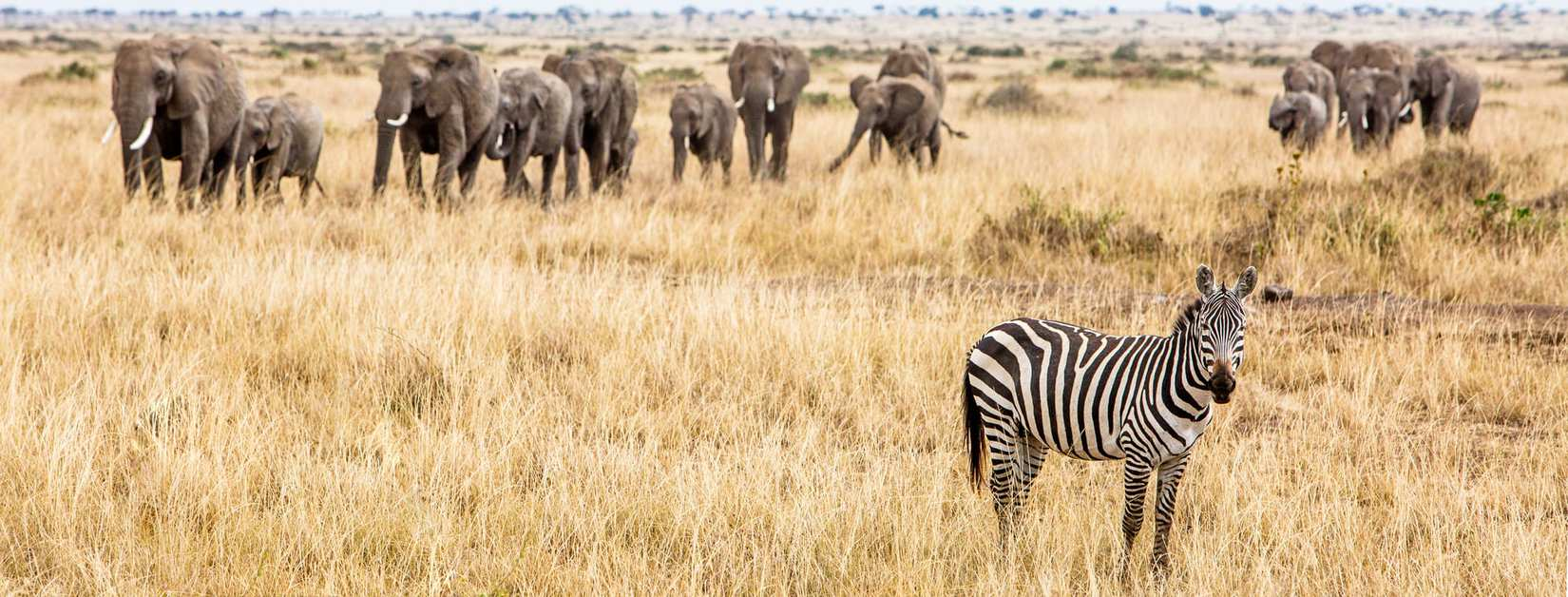 Afrikas farligste – 'The Big 5'
