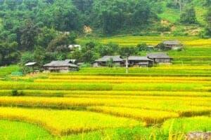 I dag rejser vi ad snoede veje til Tan Xa Phin i Hoang Su Phi-distriktet, som er berømt for at have nogle helt fantastisk smukke risterrasser og nogle af områdets mest fortryllende destinationer. Ved ankomst til Tan Xa Phin tager vi ud på et kort formiddagstrek, hvor vi gør stop ved en lokal familie, der dyrker te. Her lærer vi om tebladets rejse – fra frisk blad til tørret te.  Herefter trekker vi videre til en Hmong-landsby, hvor vi spiser frokost sammen med de lokale. Med fulde maver trekker vi videre gennem en Dao-landsby til Tay-landsbyen Nam Soong Village, hvor vi overnatter på et lokalt homestay.