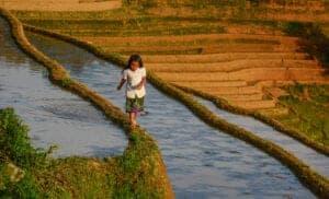 I dag skal vi møde flere af de lokale minoritetsgrupper – vi skal nemlig videre op i det nordlige Vietnams bjerge. Dagens trek fører os først gennem Nam Son Village, hvor vi oplever det daglige liv, de lokale fører, før vi krydser en hængebro og begynder vores tur op i bjergene. På vejen opad stopper vi i endnu en Hmong-landsby, hvor vi lærer om de skikke og traditioner, de har heroppe i bjergene, inden vi fortsætter.  I løbet af resten af dagens kommer vi til at møde flere små minoritetsgrupper, herunder Long Tunics Dao, Hmong Flower og Nung. Vi overnatter på et lokalt homestay i Ho Thau Village.