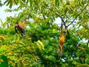 Du kan tage på vandretur i parken sammen med en certificeret, lokal guide. Han eller hun vil tage dig med ud og opleve det fantastiske liv, der er at finde i den tropiske regnskov.