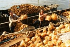 I dag kører vi i 2 timer for at komme til Ben Tre, som er vores indgang til Mekong deltaet. Her går vi ombord på en lille båd og sejler afsted ud i den mægtige Mekongflod.  I løbet af sejlturen besøger vi nogle lokale virksomheder, herunder en murstensfabrik og fabrik, der forarbejder kokosnødder. Herefter går vi i land og vandrer til en lokal landsby, hvor vi ser, hvordan de væver måtter. Så hopper vi på den lokale afart af en tuk-tuk og fortsætter dagens tur via landevejen mod molen.  Ved molen går vi ombord på den smukke teaktræsbåd Le Jarai og fortsætter vores sejltur på Mekongfloden. På båden får du tilberedt en menu bestående af tre lækre Mekongspecialiteter. Når du har spist frokost, står den på afslapning på dækket, mens vi sejler tilbage til Ben Tre, hvorfra du bliver kørt tilbage til Ho Chi Minh, hvor du ankommer sen eftermiddag.