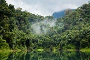 Efter frokost på lodgen tager vi ind i Khao Sok junglen, hvor et eventyr fyldt med frodigt løv, dyreliv og 30 meter høje træer venter dig. Via de gamle spor fra de tidligere jægere vandrer vi dybt ind i den 739 kvadratkilometer store jungle og forlader den moderne verden. Her oplever vi ét af verdens ældste økosystemer og får ekspertviden om området fra vores lokalguide.  Langs trekket i junglen er det igen muligt at opleve dyrelivet – så ha' også kameraet klar i dag. Der er chancer får at se spor og efterladenskaber fra junglens dyreliv – heriblandt elefanter, bjørne, tapirer og indokinesiske leoparder. Når det kommer til junglens dyreliv, så er chancen stor for at opleve eksotiske fugle, insekter og forskellige abearter, heriblandt gibbonaber. Hele dagen er du også omringet af den smukkeste flora og fauna, herunder de tårnhøje træer, blade på størrelse med spiseborde og forskellige planter, som bliver anvendt til medicinske formål.  Afhængig af vejret og hvornår på sæsonen du rejser, kan du også opleve store vandfald og grotter. Rejser du i regnsæsonen (juli – oktober) vil du opleve vandfald, der gør grotterne svære at komme ind i, men som til gengæld er utroligt smukke. Rejser du uden for regnsæsonen, kan du opleve de fascinerende grotter.  Om aftenen tager vi en ægte junglemiddag, inden vi bevæger os hjem mod lodgen.