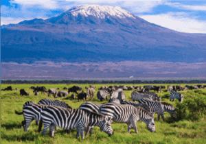 Efter morgenmaden på The Boma hotel, går turen mod den berømte Amboseli National Park, hvor du bliver indkvarteret på Ol Tokai Lodge, som ligger midt i parken.  Amboseli National Park er en national park i den sydlige del af Kenya.  Parken udgør ca. 392 kvadrat kilometer og beskyttet af lokale myndigheder, Maasai folket og Kenya Wildlife Service. Parken er mest af alt kendt for at kunne se elefanter samt andre dyrarter på tæt hold. Desuden giver parken dig mulighed til at opleve det lokale Maasai folk og sidst men ikke mindst, har du det enorme Mount Kilimanjaro i baggrunden.  Om eftermiddagen kan du tage et game drive, hvor du i bliver kørt rundt i en 4x4 jeep i parken. På et game drive vil du opleve dyrelivet i de mange vådområder, hvor bl.a. store flokke af elefanter holder til.   Om aftenen kan du nyde solnedgangen i en af lodgens 2 barer eller tage en dukkert i swimmingpoolen.   Har du lyst, kan du efter middagen opleve den traditionelle Maasai dans, eller høre mere om Afrikas vilde dyreliv (mod betaling).