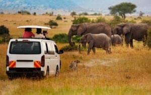 """Vi starter med en morgenmad, hvorefter vi bevæger os videre langs The Great Rift Valley mod Masai Mara Sopa Lodge, hvor du bliver indkvarteret.   Efter frokost bruger vi eftermiddagen på det, der hedder """"game-viewing"""" ud over den flotte savanne og det berømte Masai Mara National Reservat.   Ved game-viewing er der god mulighed for at se og fotografere dyrene.  Herefter ankommer vi til Masai Mara Sopa Lodgen, hvor du kan koble af i lodgens luksuriøse pool før lodgen byder på en god middag."""