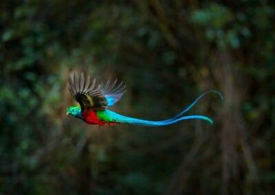 Vandring i Costa Rica