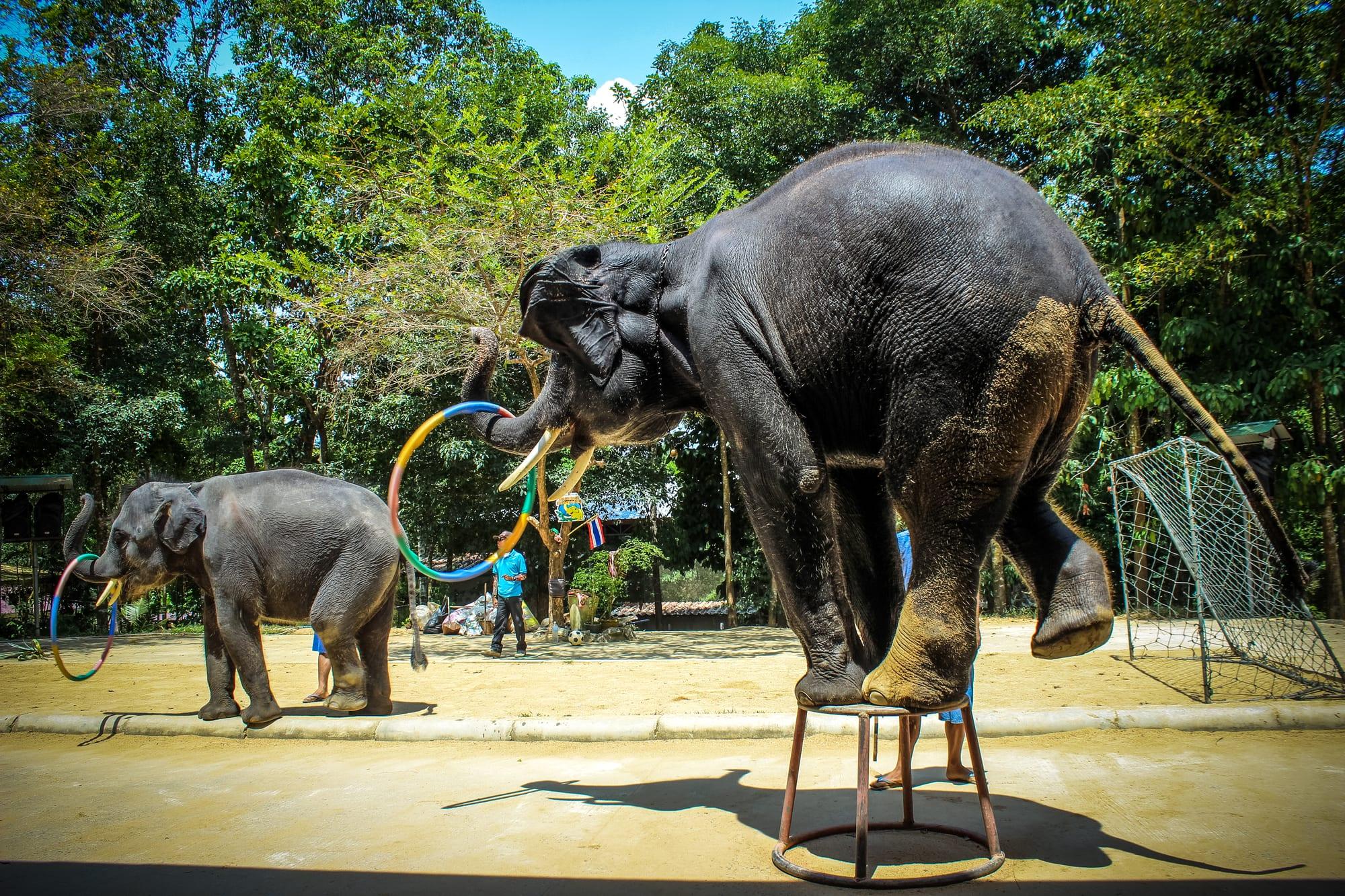 Turismens mest truede dyrearter