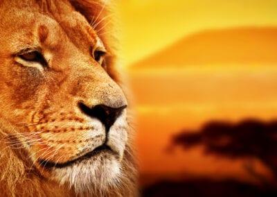 Kenya safari og badeferie i Mombasa
