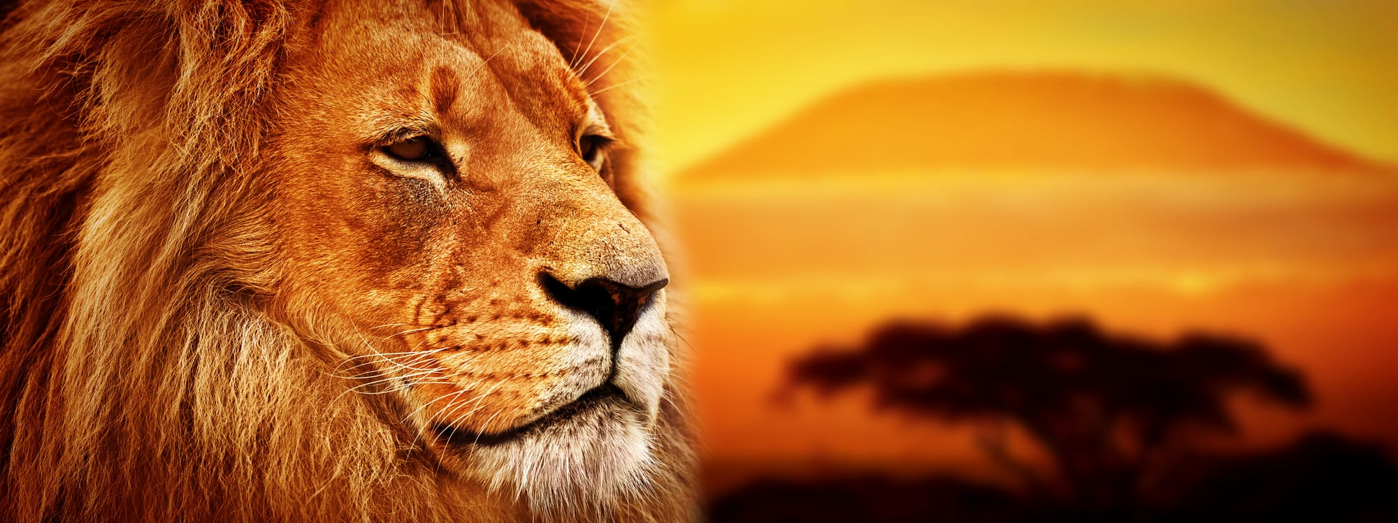 Kenya safari inkl. badeferie i Mombasa