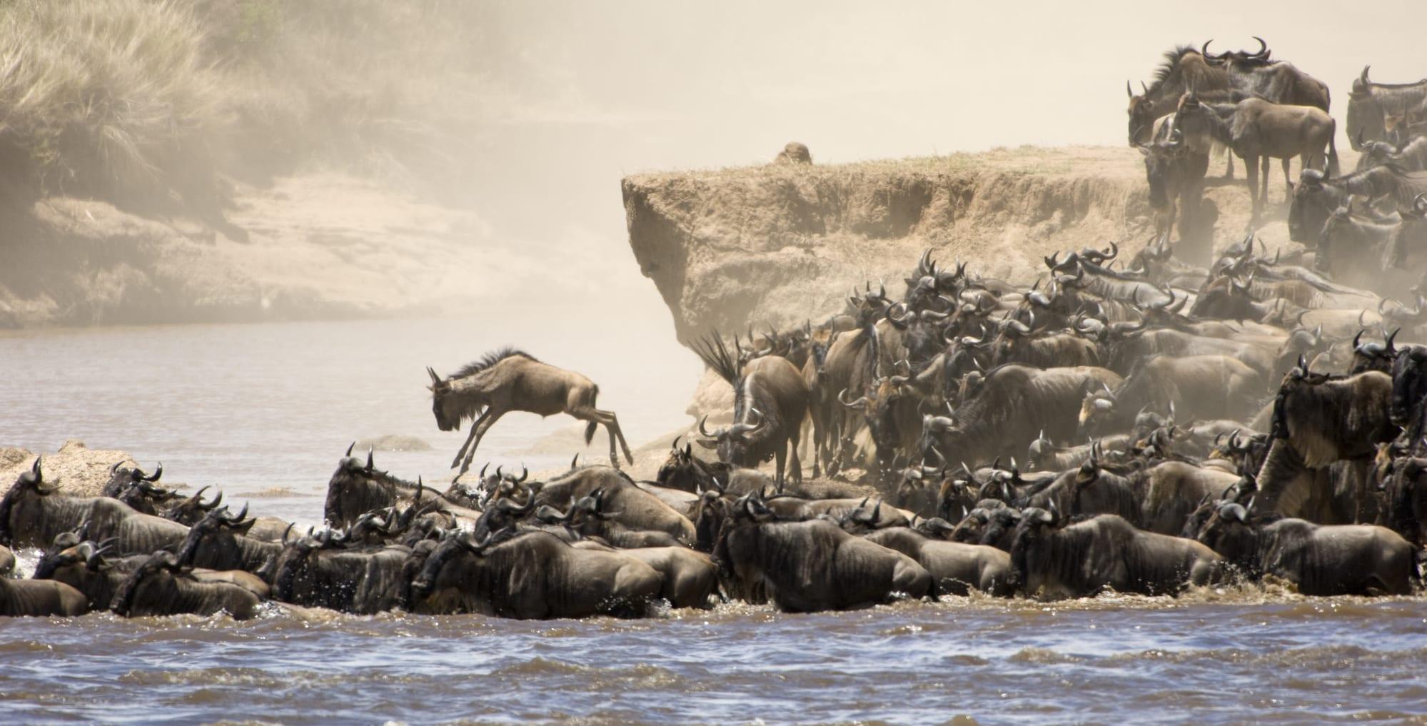 Kultur, luksus og safari i Tanzania