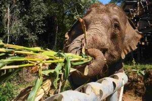 Friviligt arbejde med dyr i udlandet