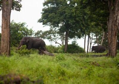 Storby, badeferie og elefanter i Thailand