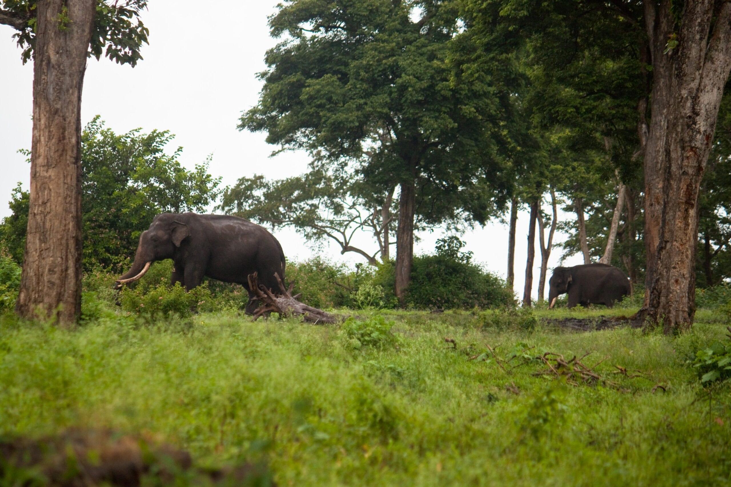 Elefanter thailand