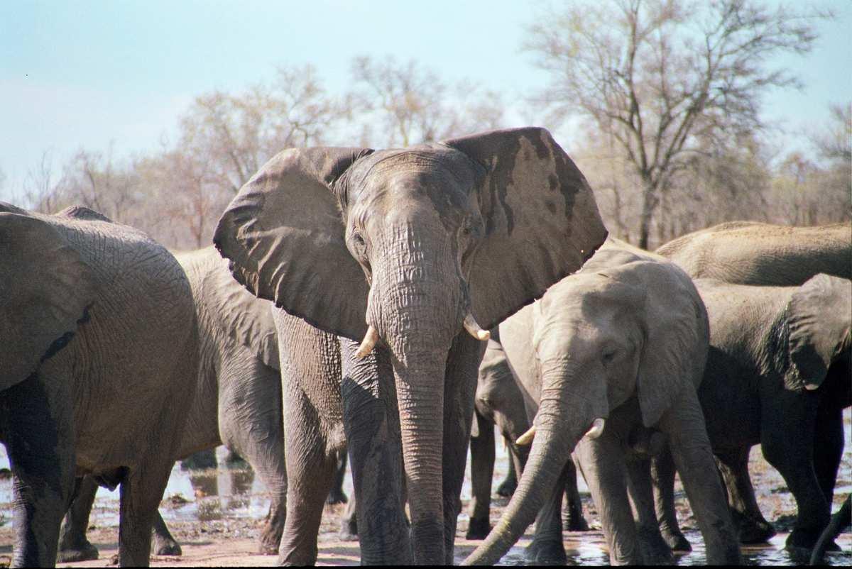 Magiske Kenya: Strandparadis og safarieventyr