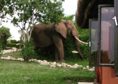 Buffalo Safari Lodge
