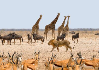 Safari og Zanzibar i Tanzania