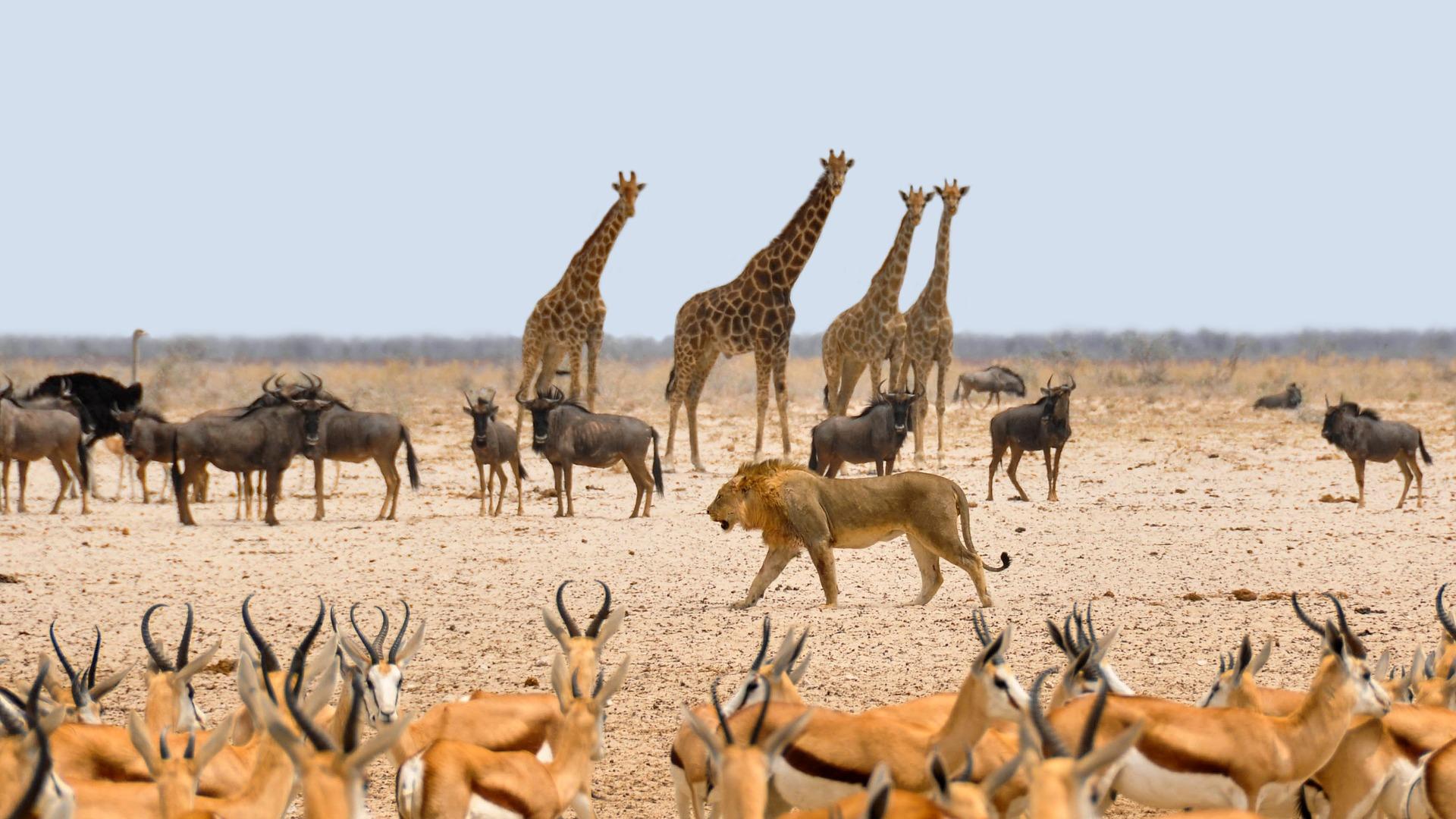 Safari i Afrika